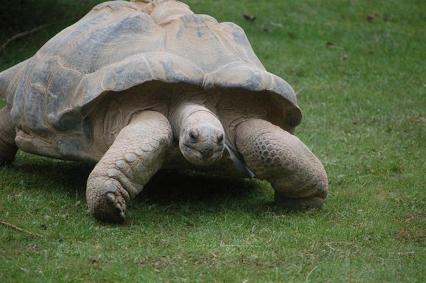 » Une tortue géante supposée éteinte depuis 100 ans retrouvée aux îles Galápagos